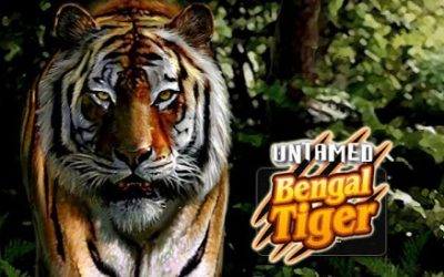 "Played ""Untamed: Bengal Tiger"" on the Thailand trip"